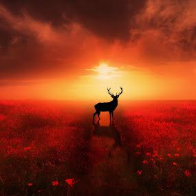 Poppy Field Dreams by Jennifer Woodward - Digital Art Places ( animals, red, sunset, silhouette, wildlife, poppy, poppies, sunrise, stag, landscape, flowers, deer )