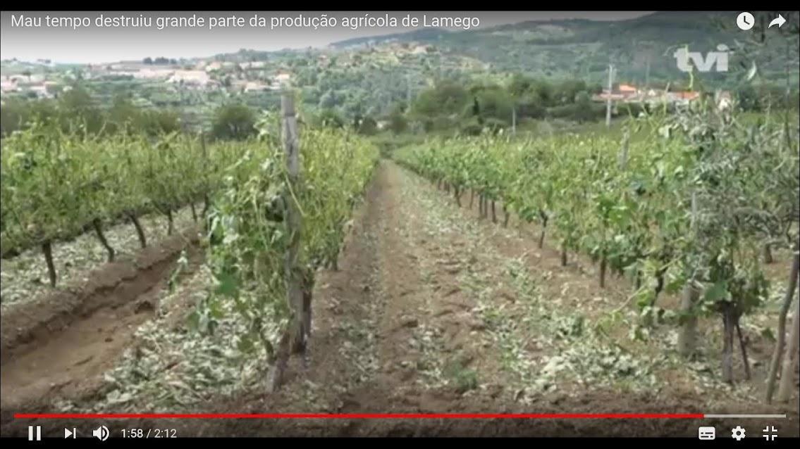 Vídeo - Mau tempo destruiu grande parte da produção agrícola de Lamego