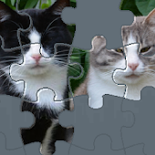 Puzzle with Cute Cats