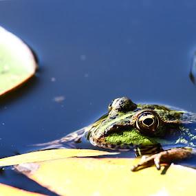 Your eyes by Vasco Morais - Animals Amphibians