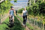 Велодорожки вдоль виноградников