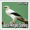 Black-Winged Starling Sounds APK