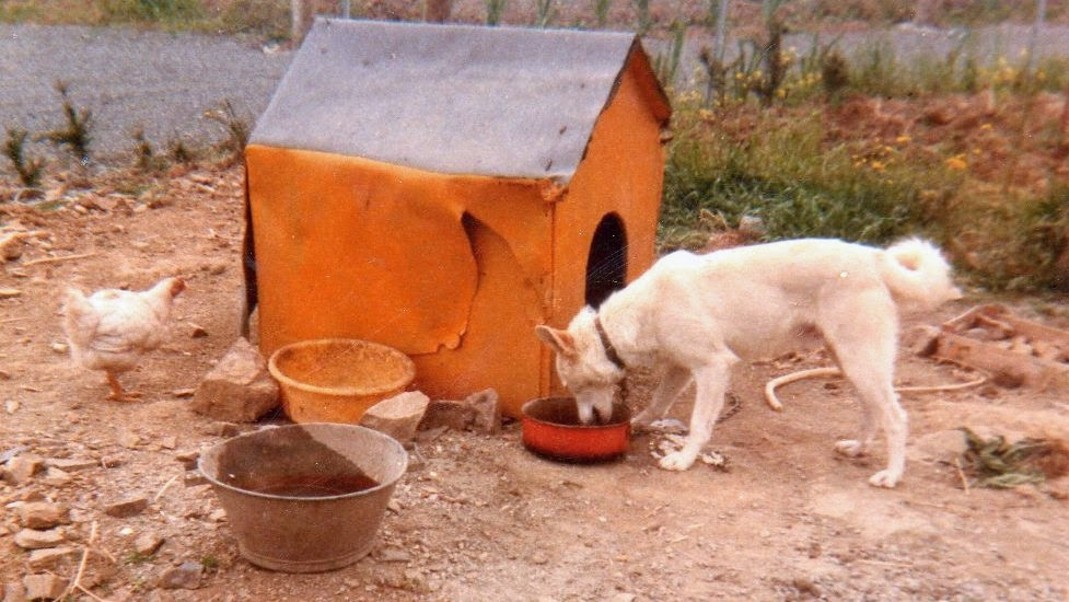 Tintin mon premier chien