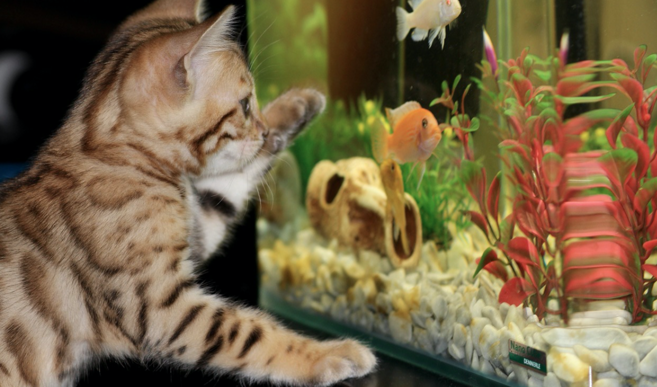 The Pros and Cons of Having Fish as Pets
