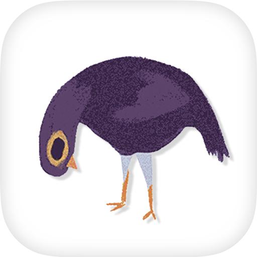 Trash Doves Birds World