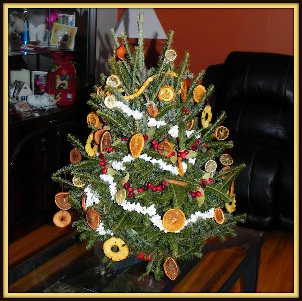 My Little Living Pine Tree Recipe