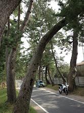 Photo: 土手に上って、並木風に撮ってみます・・・。