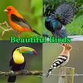 Beautiful Birds APK