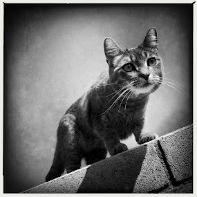 Hanging out with Kitty by Roger  Clay - Instagram & Mobile iPhone ( corona ca. )