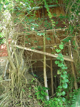 Photo: Bungalow swallowed by jungle.