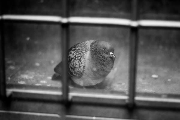 Free as a bird...? di Erre-Gi