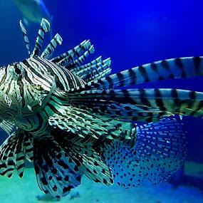 Dingle Aquarium  by Helen Quirke  - Animals Fish ( fish, dingle, water, aquarium, ireland,  )