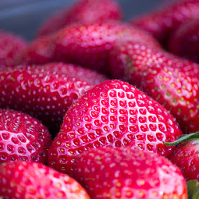 Like Candy by Paul Cushing - Food & Drink Fruits & Vegetables ( fruit, red, food, strawberries, ripe, delicious )
