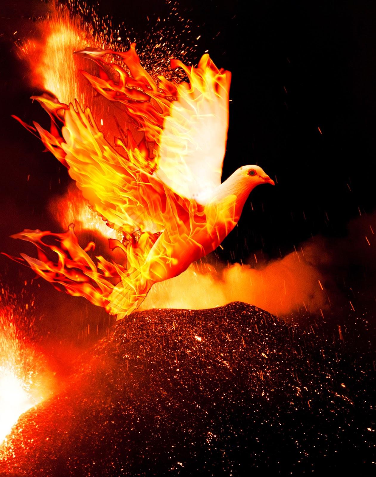 pentecost bird.jpg
