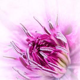 by Mario Pavlić - Flowers Flower Buds