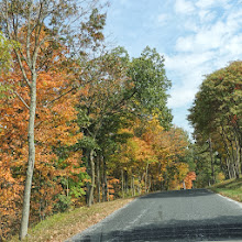 Photo: Fall Color