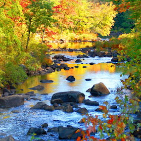 New Hampshire Autumn River by Robin Amaral - Uncategorized All Uncategorized ( travel destination, boulders, new england, fall colors, waterscape, autumn, trees, tourism, forest, leaves, landscape, new hampshire, river,  )