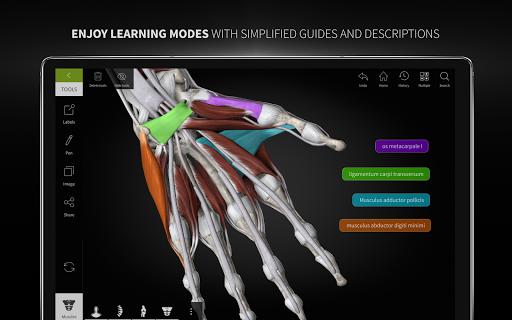 Anatomyka - 3D Human Anatomy Atlas 1.8.5 screenshots 24