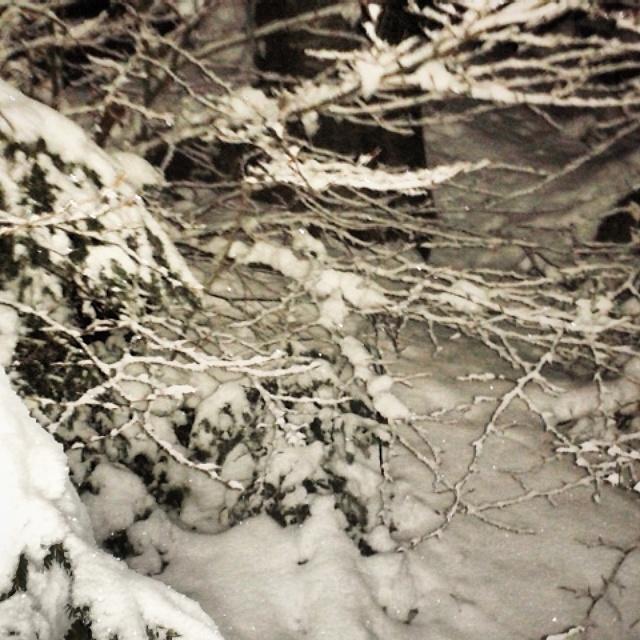 Neve come Zucchero di Gabo