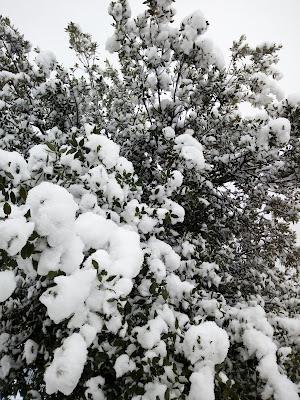 Neve di emanuela_pelusi