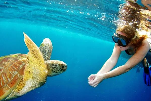 Spot sea turles