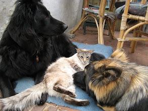 Photo: Sinjo gaat net zo makkelijk tussen de honden liggen