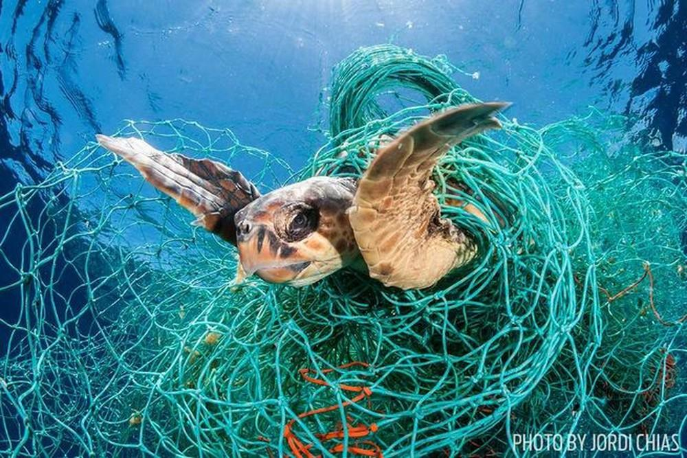 Kết quả hình ảnh cho sinh vật biển vs nhựa