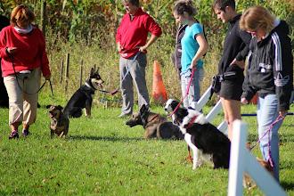 Photo: plein de chiens différents