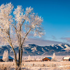 The Neighborhood Tree by Chad Roberts - Nature Up Close Trees & Bushes ( mountains, frost, snow, winter, cold, house )