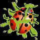 LadyBug Smasher (game)