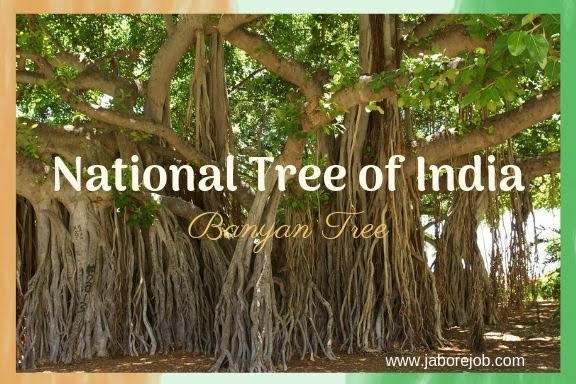 National Symbols of India, National Tree of India