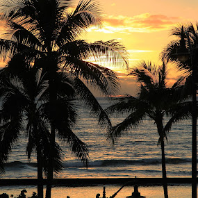 Hawaii by Liesl Ross Photos - Landscapes Sunsets & Sunrises ( sunset, palm trees, ocean, beach, hawaii, waikiki )