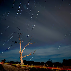 Tree and Startrials by William Greenfield - Landscapes Starscapes ( car, clouds, tree, longlea, movement, australia, star, night, vic, light, trials, bowles road )