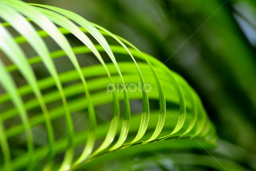 Leaf by Vijesh Rajan - Nature Up Close Leaves & Grasses ( green, symmetry, leaf, leaves, garden )
