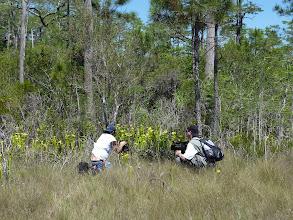 Photo: Brian and Siggi filming Sarracenia flava var. maxima near Sumatra (Florida Panhandle).
