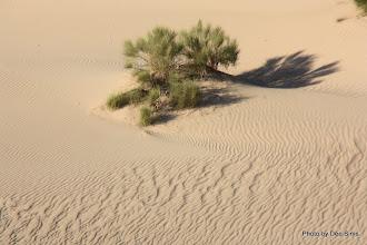 Photo: (Year 3) Day 37 - Shrub and Sand Dunes
