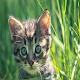 Imágenes de Gatitos 2020 Download on Windows