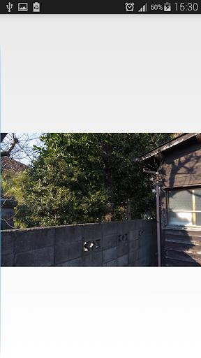 【免費休閒App】Trouver les chats cachés-APP點子