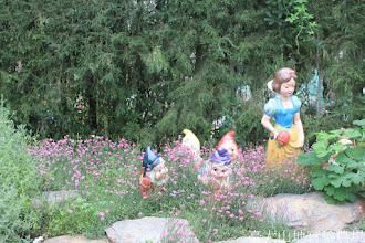 Photo: 拍攝地點: 梅峰-溫帶花卉區 拍攝植物:美女石竹 拍攝日期: 2015_05_29_FY