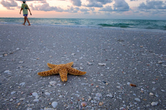 Photo: Sanibel Beach  Just before dawn and the place is already crowded.  Please visit the blog at http://williambeem.com