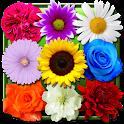 鲜花动态壁纸 icon