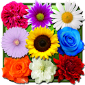 Flores Fondo Animado icon