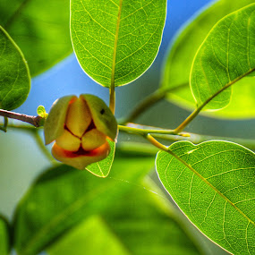 Plant by Olivier Grau - Nature Up Close Other plants ( green, plants, branch, leaves, flower,  )