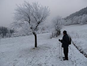 Photo: 11.Pieninki Skrzydlańskie. Lodowe ozdoby na drzewie.