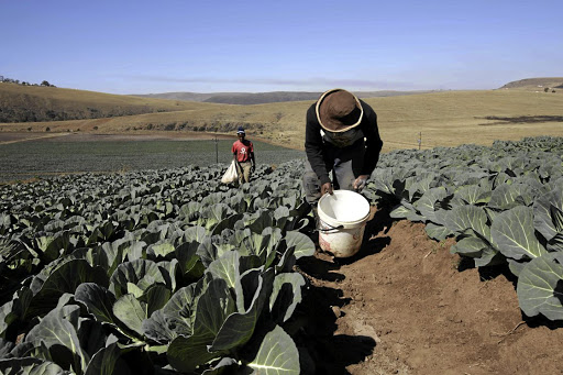 An agriculture project in KwaMeyi in KwaZulu-Natal. Picture: TEBOGO LETSIE