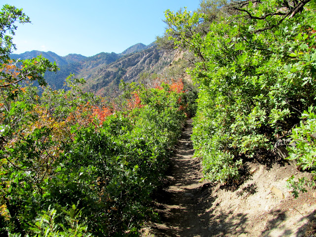 Ascending the trail through mostly-green scrub oak