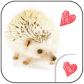 Cute wallpaper★Cute Hedgehog