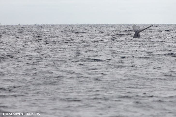 Fin Whale Sighting with Pacific Nature Tours.