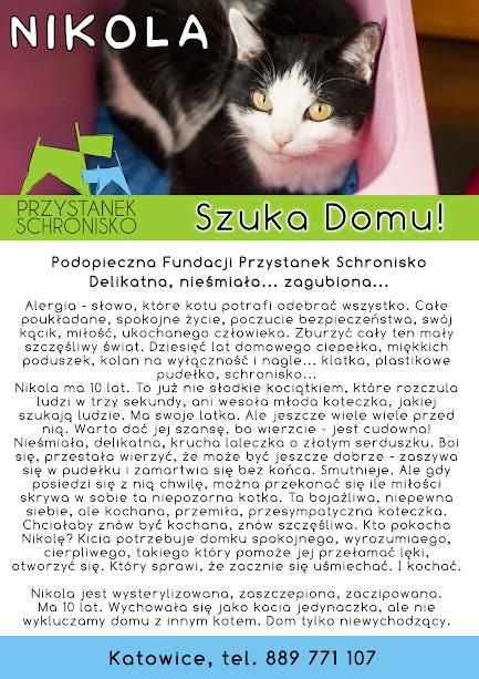 Firmówka Nikola