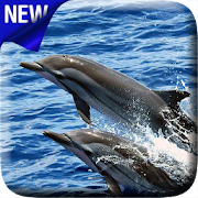 App Dolphins Video Live Wallpaper APK for Windows Phone